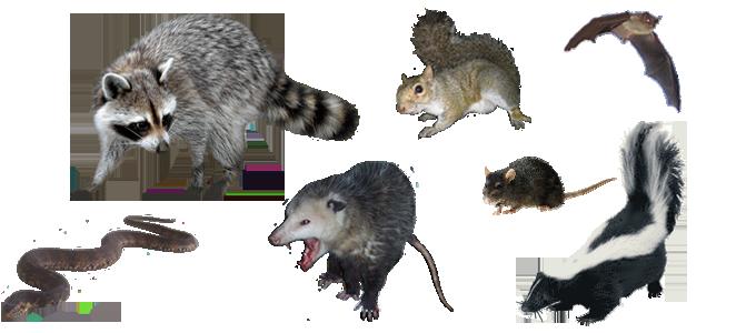 Image result for wildlife pest control